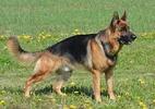 ДРЕССИРОВКА СОБАК: Умное воспитание собак,развитие психики